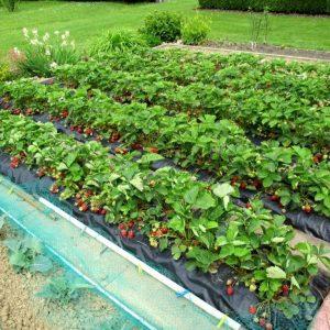 Plantation potager