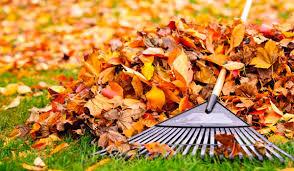 Ramassage de feuilles à Lauris Lourmarin Cadenet
