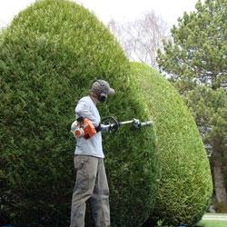 Taille de massifs de jardin